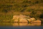 luipaard.jpg