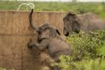 olifant DSC_3479.jpeg
