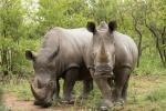2 rhino DSC_0747.jpeg